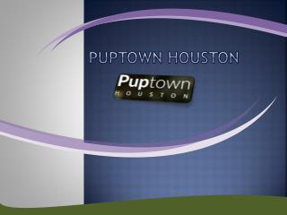 Puppy Training Woodlands TX - Puptown Houston