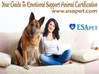 Your Guide to Emotional Support Animal Certification