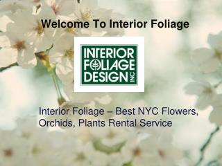 Interior Foliage – Best NYC Flowers, Orchids, Plants Rental Service