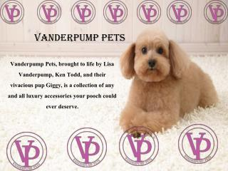 Choose Luxury Dog Collars at Vanderpump Pets