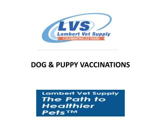 Dog & Puppy Vaccinations