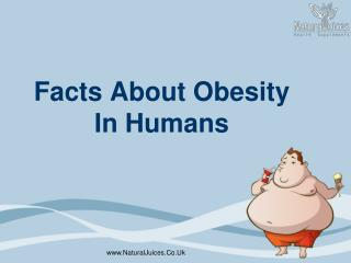 Facts About Obesity In Humans