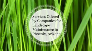 Services Offered By Companies for Landscape Maintenance in Phoenix Arizona