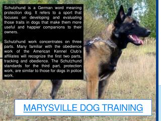 Yuba City Dog Training