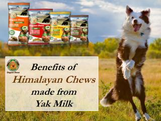 Benefits of Himalayan Chews Made from Yak Milk