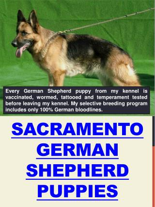 Sacramento Dog Training