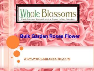 Bulk Garden Roses Flower - www.wholeblossoms.com