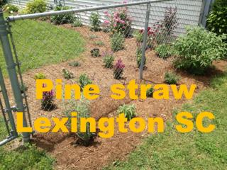 Want To Get Residential Pine straw Lexington SC