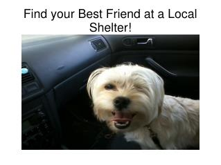 Find your Best Friend at a Local Shelter!