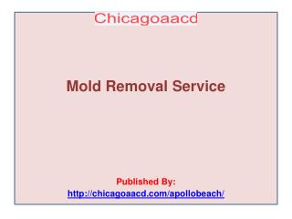 Chicagoaacd-Mold Removal Service