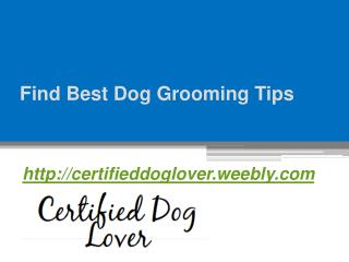 Find Best Dog Grooming Tips - Certifieddoglover.weebly.com