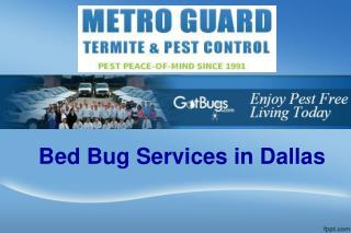 Bed Bug Services in Dallas