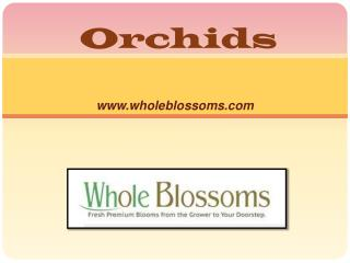 Buy Fresh Cut Orchids - www.wholeblossoms.com
