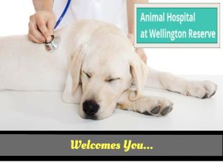 Pet Boarding And Vaccines in Wellington