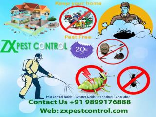 Best Pest Control Noida, Greater Noida Service Call 9899176888
