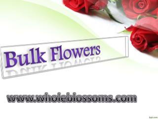 Bulk Flowers Online - www.wholeblossoms.com