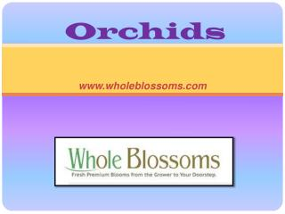 Wholesale Orchids - www.wholeblossoms.com