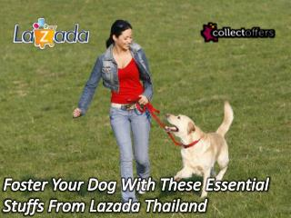 Foster Your Dog With These Essential Stuffs From Lazada Thailand!
