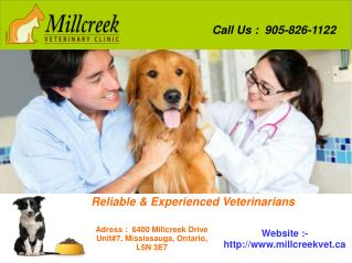 Animal Hospital in Mississauga