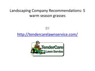 Landscaping Company Recommendations 5 warm season grasses