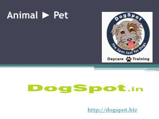 Dog Daycare Encinitas