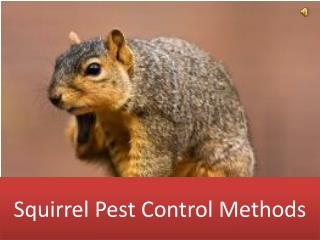 Squirrel Pest Control Methods