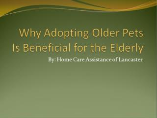 Why Adopting Older Pets Is Beneficial for the Elderly