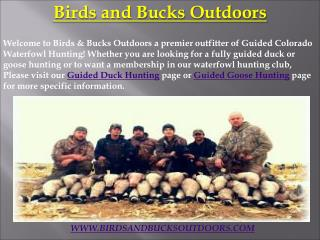 Guided Duck Hunting in Colorado