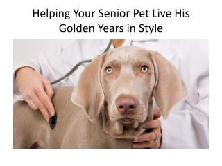 Helping Your Senior Pet Live His Golden Years in Style