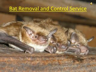 Bat Removal and Control Services