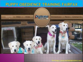 Puppy Obedience Training Fairfax