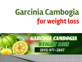 Garcinia Cambogia for Weight Loss, You Should Consider