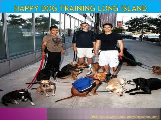 Happy dog training Long Island