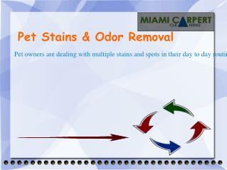 Pet Stains & Odor Removal | Carpet Cleaners Miami FL