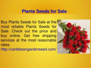 Non-GMO Seeds For Sale