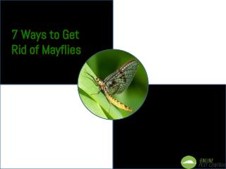 7 Ways to Get Rid of Mayflies