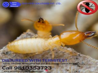 Get 10% off on termite pest control services. Call 9810353723 for free inspection.