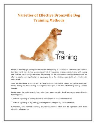 Brewster Dog Training