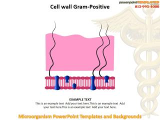 Microorganism PowerPoint Templates and Backgrounds