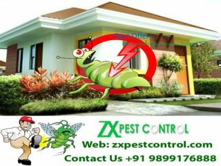 Are You Looking For The Pest Control Services? Call 9899176888