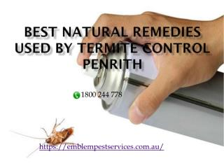 Best Natural Remedies Used by Termite Control Penrith