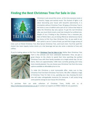 Christmas Trees for Sale in Liss
