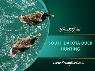 South Dakota Duck Hunting - Huntfowl