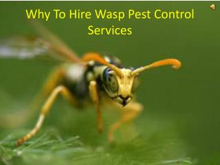 Why To Hire Wasp Pest Control Services
