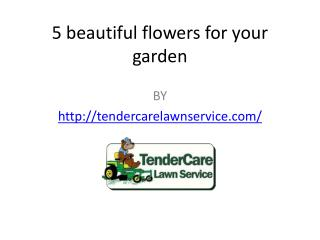 5 beautiful flowers for your garden