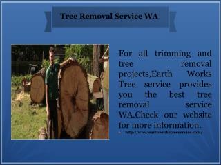 Tree Removal Service WA