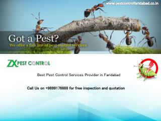15 % OFF on Pest Control and Termite Treatment Services from Pest Control Faridabad|Call on 9899176888
