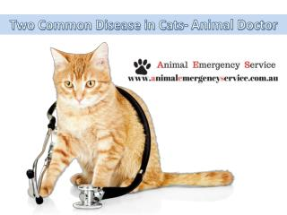 Veterinary Clinic Brisbane