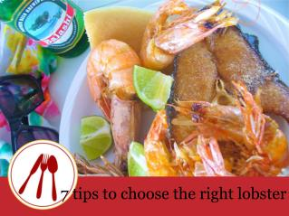 7 tips to choose the right lobster