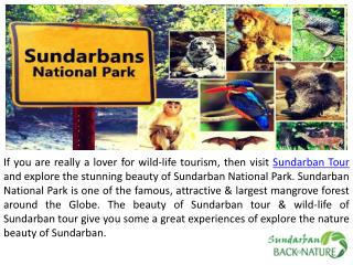Offer Superb & Affordable Sundarban Tour Package
